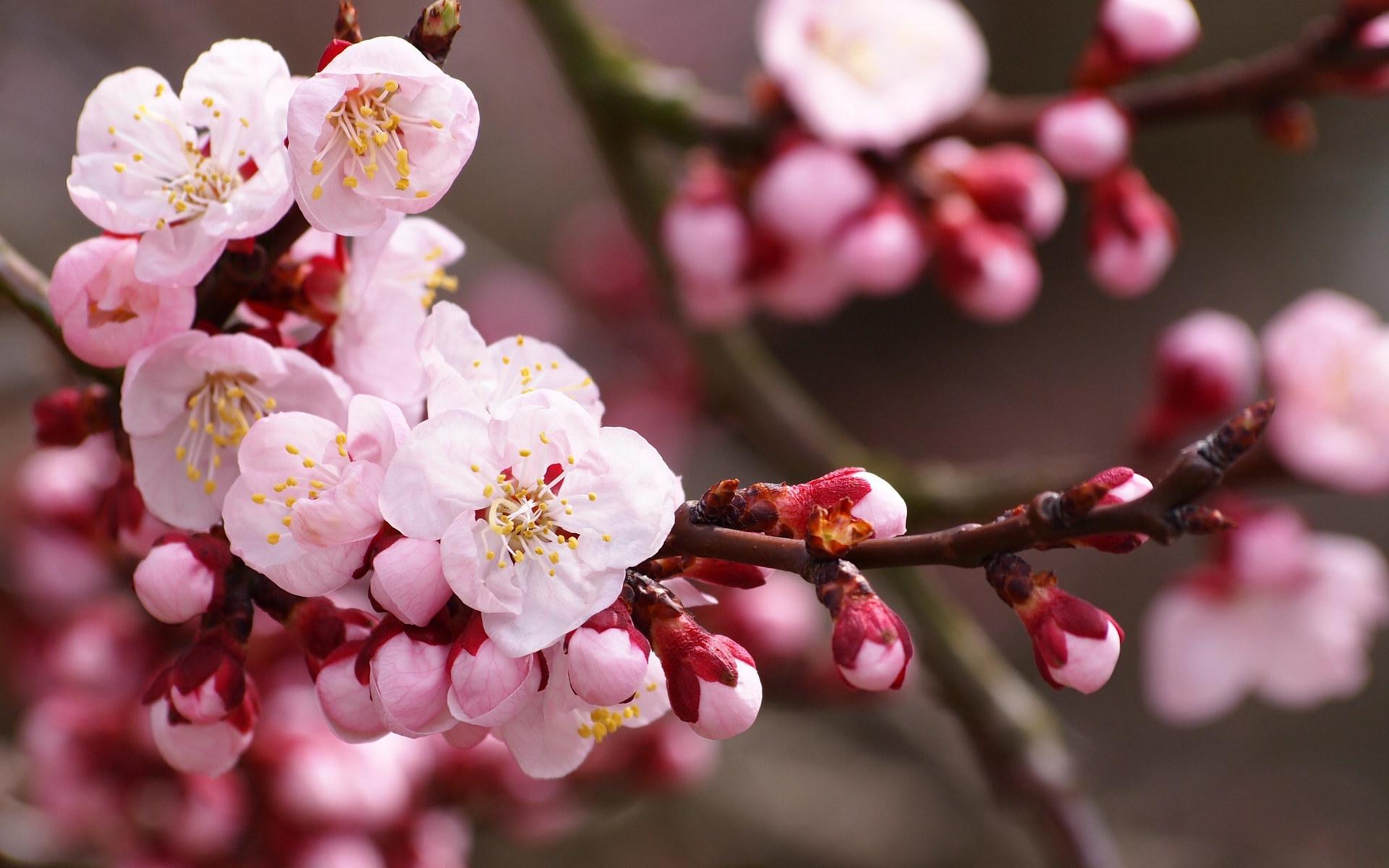 春季养生宜养什么 8点你要记住