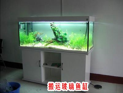 慈溪搬运鱼缸