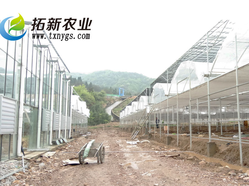 连栋薄膜温室建设项目施工