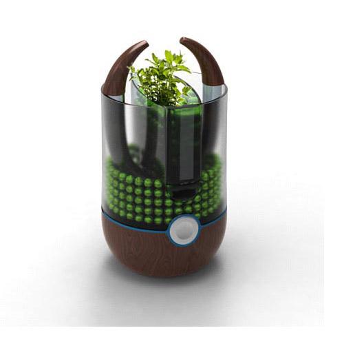 plants 植物