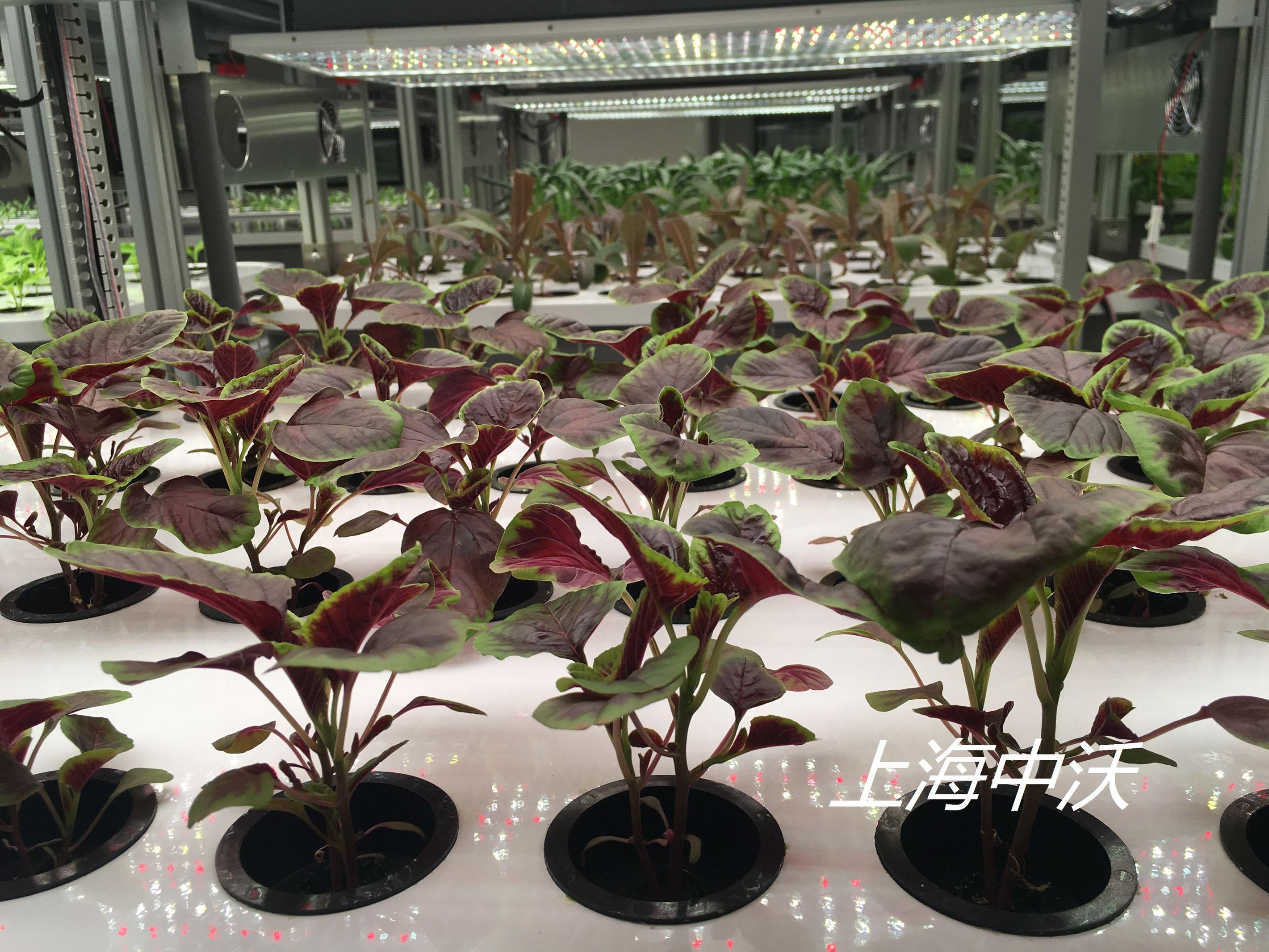 智能化雾培植物生长系统