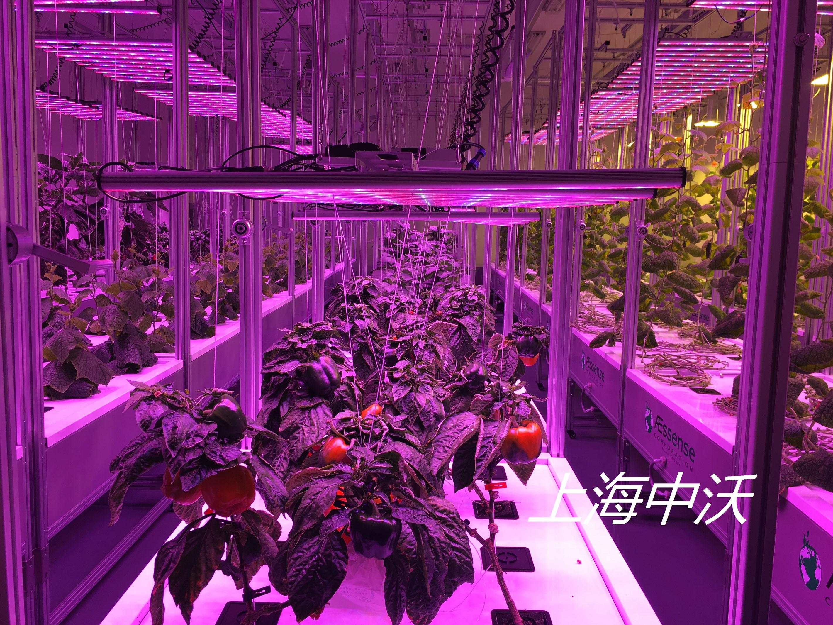 植物种植净化间