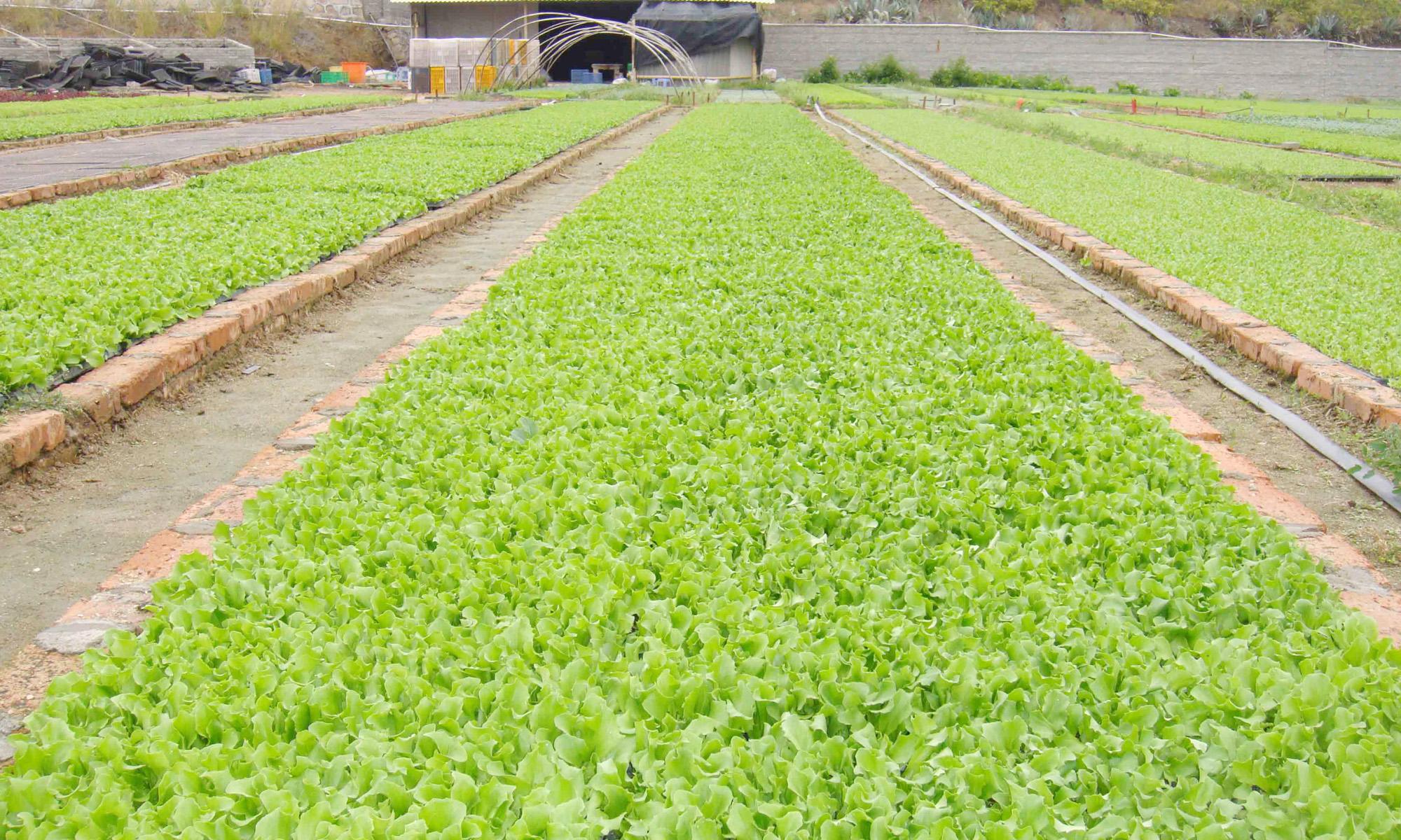 绿色健康的餐饮配送企业应该是怎么样的?