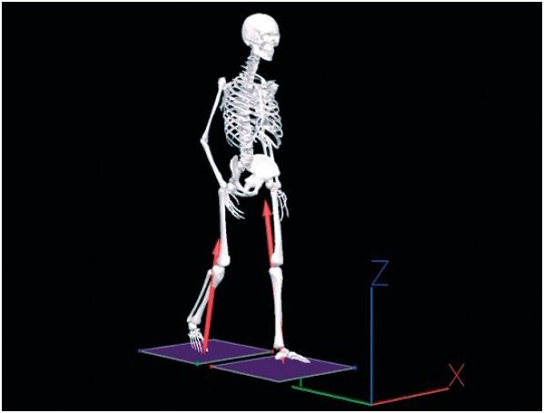 VISUAL 3D步态体态分析软件