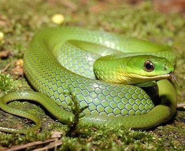 驱蛇防治方案