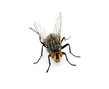 苍蝇防治方案