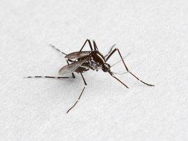 蚊类防治方案