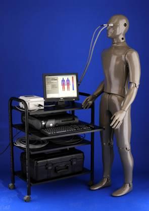 NEWTON热能人体模型