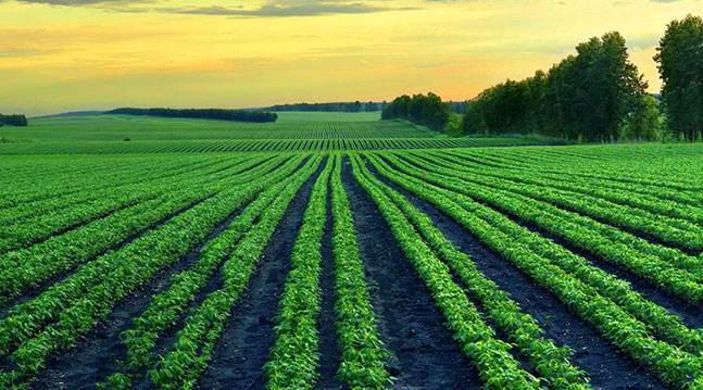 富硒小米的种植技术