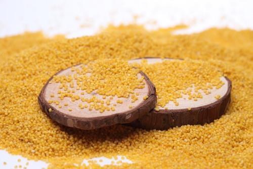 米以硒为贵--鲁乡裕富硒有机小米与您的健康同在!
