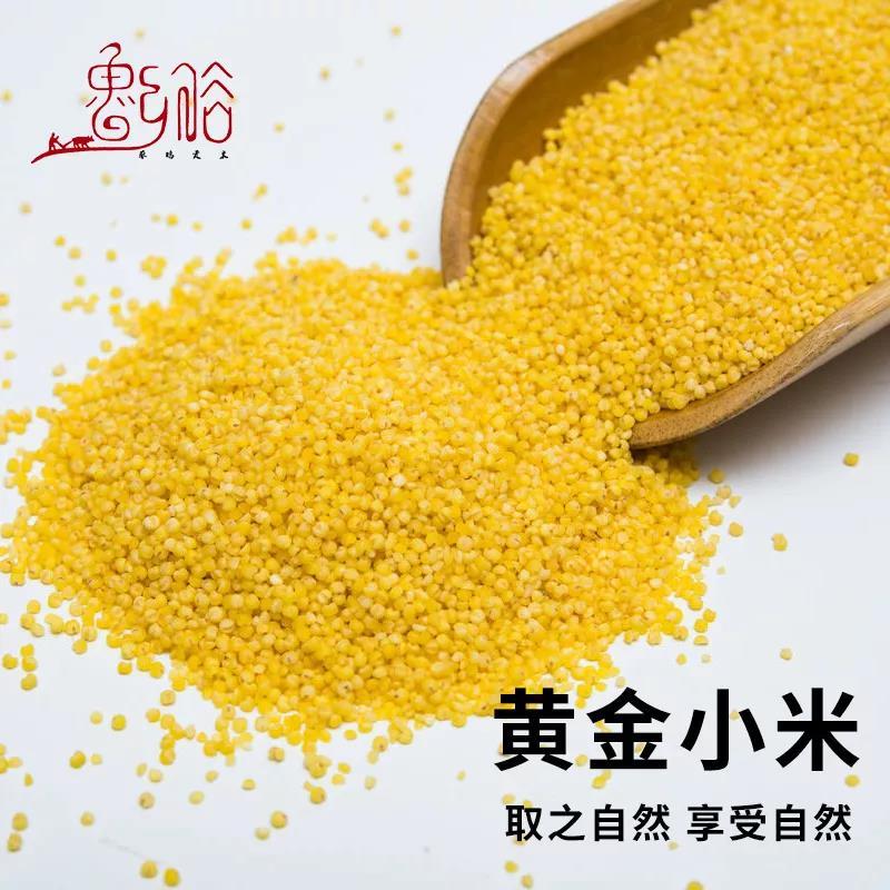 市场上小米这么多,如何挑选好小米?