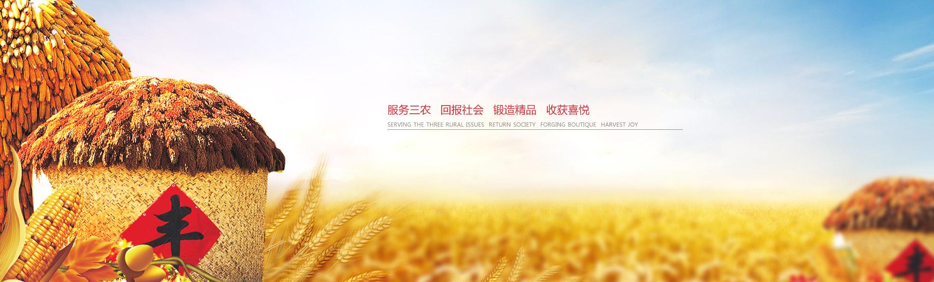 山东小麦种子厂家