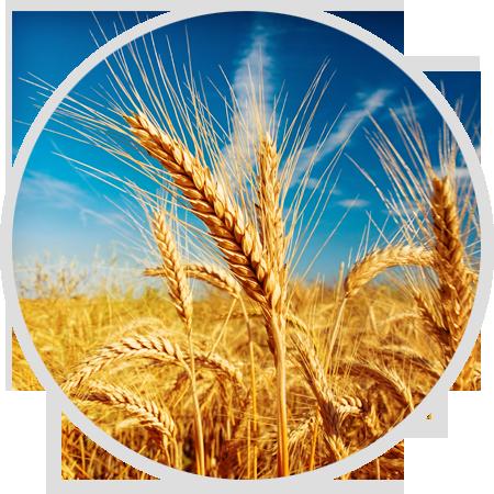 博信种业<p>专注于高品质粮食种子制造</p>