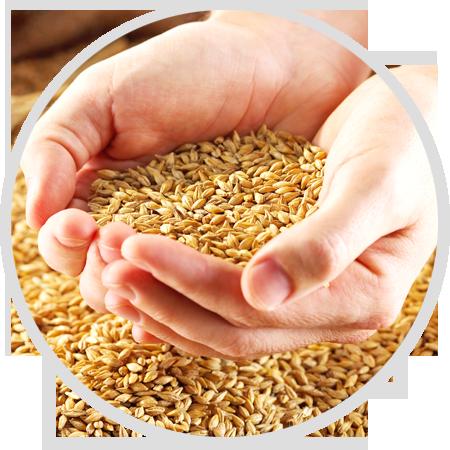 测土配方,因地育种,<p>确保每一粒种子品质</p>