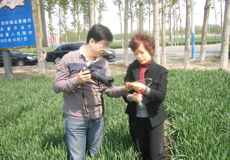 種子站領導關懷小麥新品種