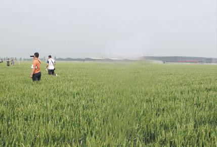 山農29小麥在桓臺縣喜獲高產