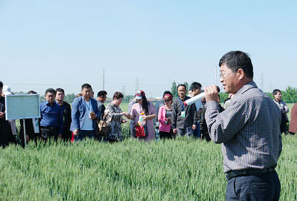 山农29小麦在桓台县喜获高产