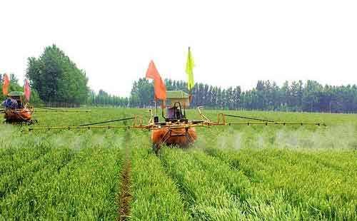 小麦种锄草剂