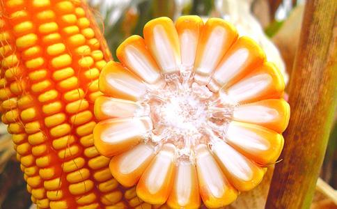玉米种子种植方向大变化