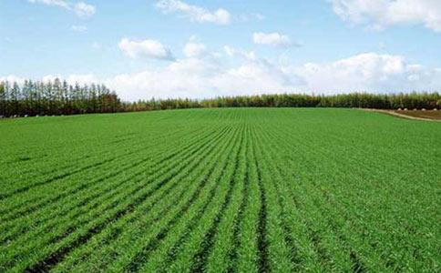 预防冬小麦种子死苗的措施