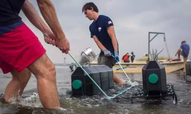 纽约市敲碎了5000个马桶只为拯救牡蛎