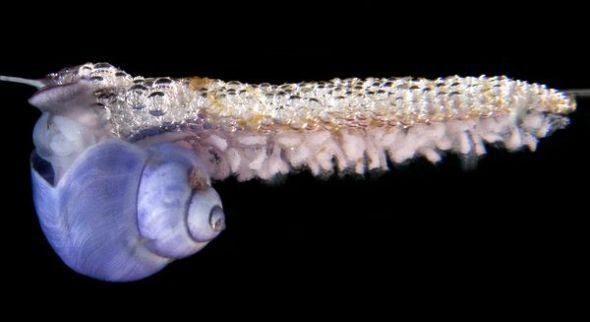 疯狂的蜗牛