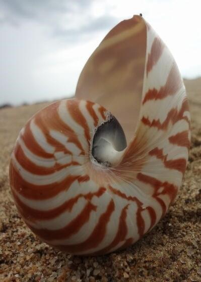 奇妙的鹦鹉螺之科学应用