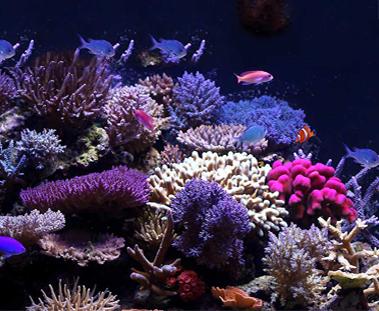 欧司朗 LED 为珊瑚虫的繁衍营造稳健的照明环境
