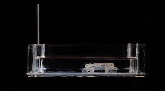 【折纸】产生的软体机器人——rollbot