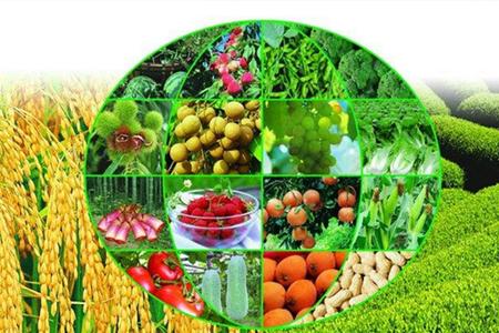 莆田蔬菜配送市场怎么打开,抓住用户特点