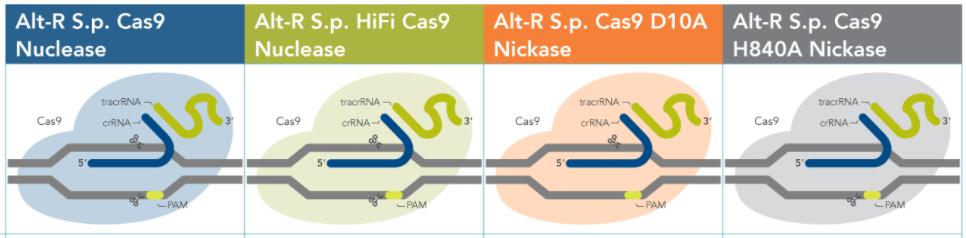 IDT Alt-R?? CRISPR-Cas9 系統簡介