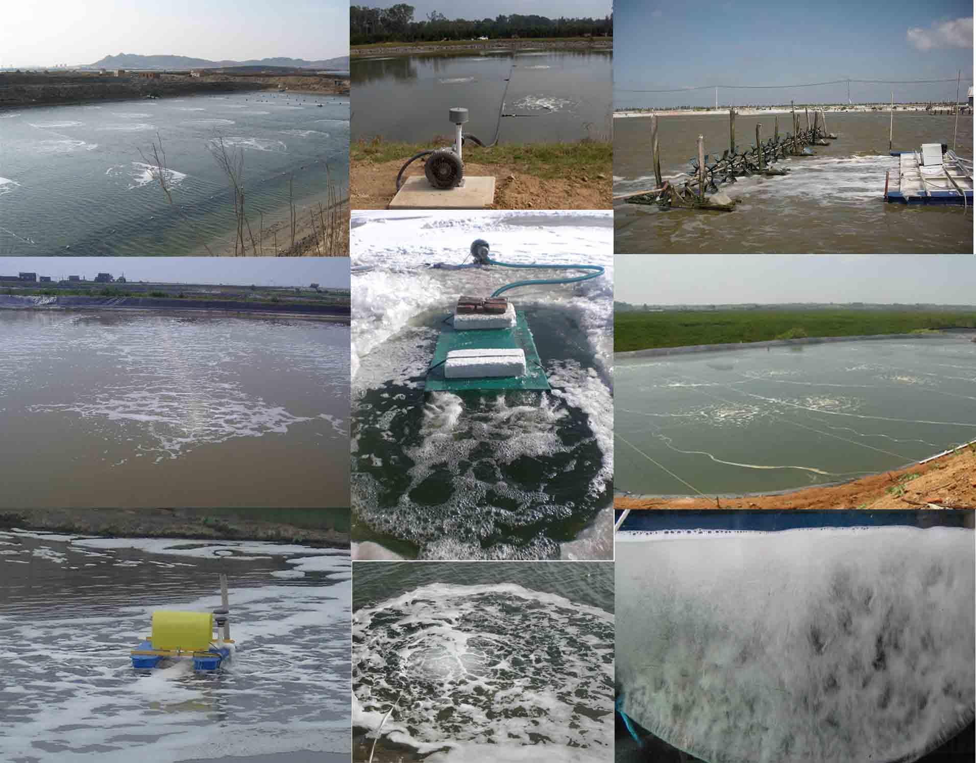 高压风机漩涡气泵水产养殖的应用案例