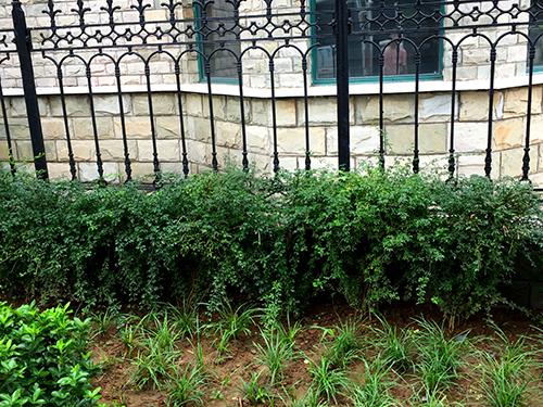 园林绿化设计案例