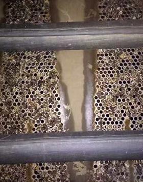 山东日照钢铁1#2#机组凝汽器化学清洗